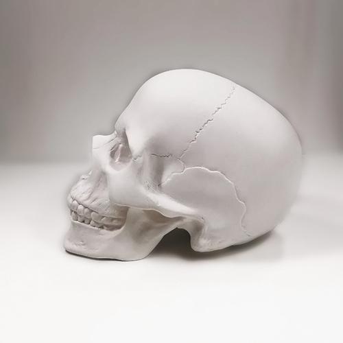 Череп анатомический (новый)