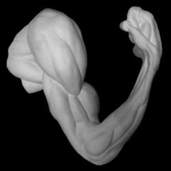 Рука анатомическая, согнутая в локте, гипс