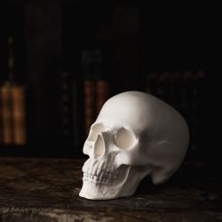 Гипсовая фигура Малевичъ череп анатомический