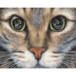 Картина по номерам «Кошачьи глаза», 40*50 см.