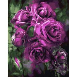 Картина по номерам «Пурпурные розы», 40*50 см.